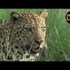 Safari en África Vivo – Viernes 22 de Febrero del 2019