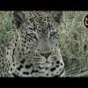 Safari en África Vivo – Viernes 22 de Marzo del 2019