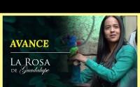Avance La Rosa de Guadalupe – Capitulo Un buen día para amar – Jueves 8 de Abril del 2021