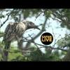 Safari en África Vivo – Sábado 23 de Marzo del 2019